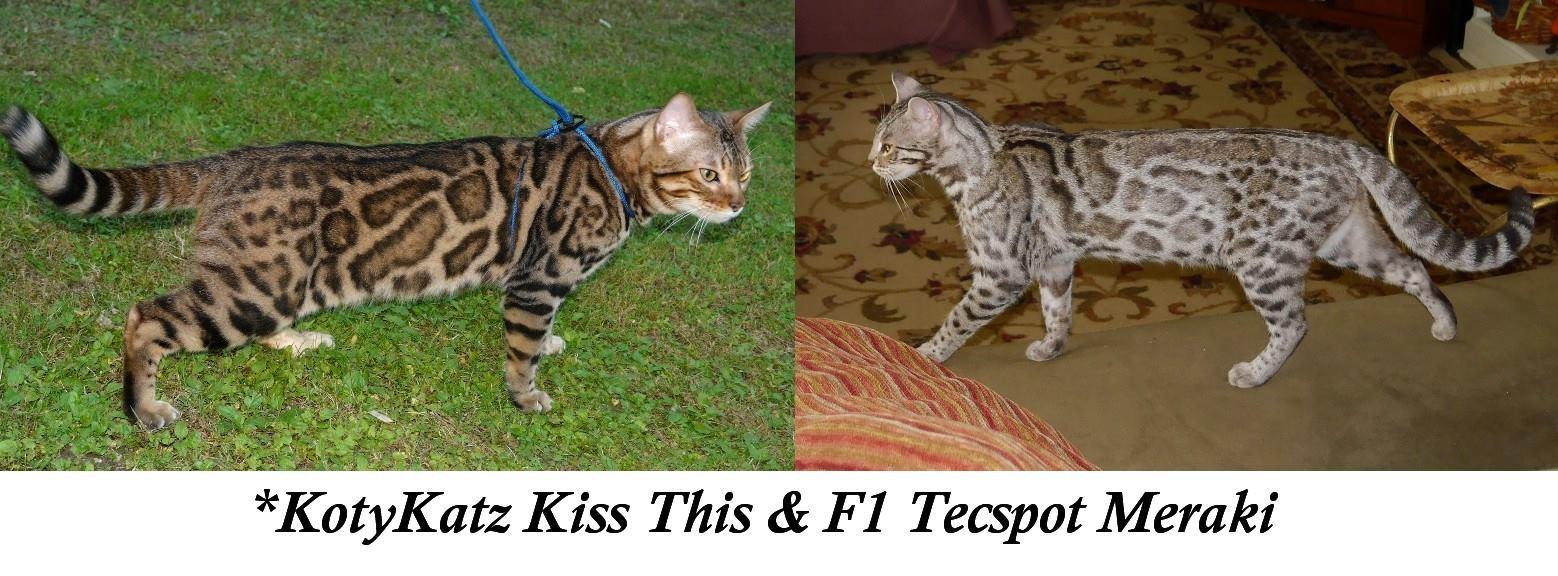Kiss This and Meraki