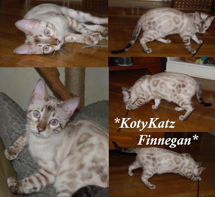 KotyKatz Finnegan