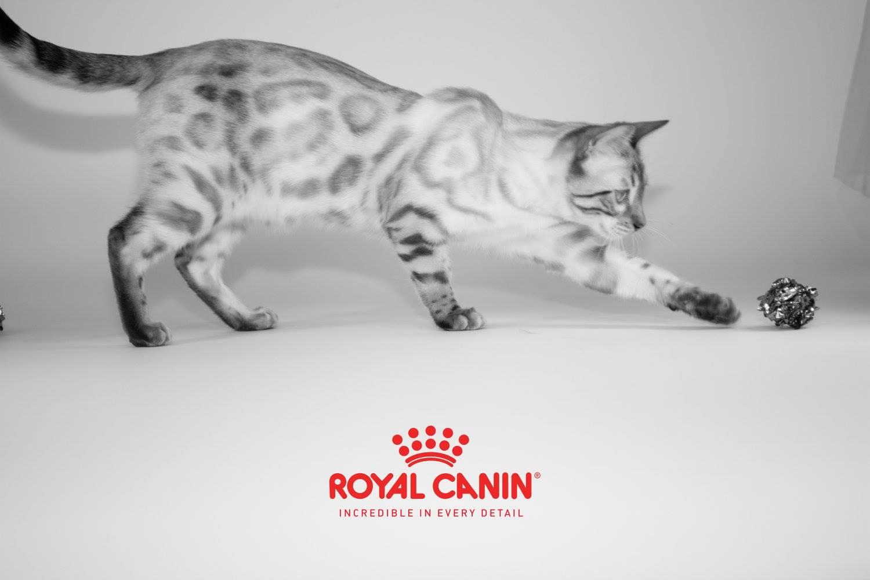 KotyKatz Royal Canin Cat Show