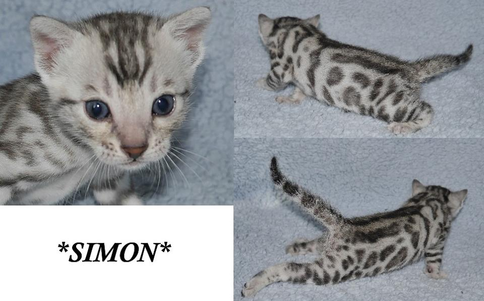 Simon 3 Weeks