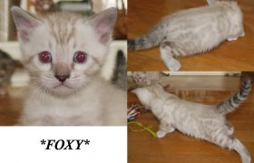 Foxy 4 Weeks