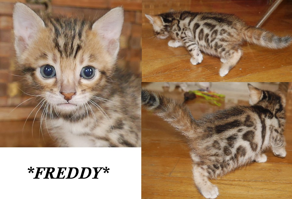Freddy 4 Weeks