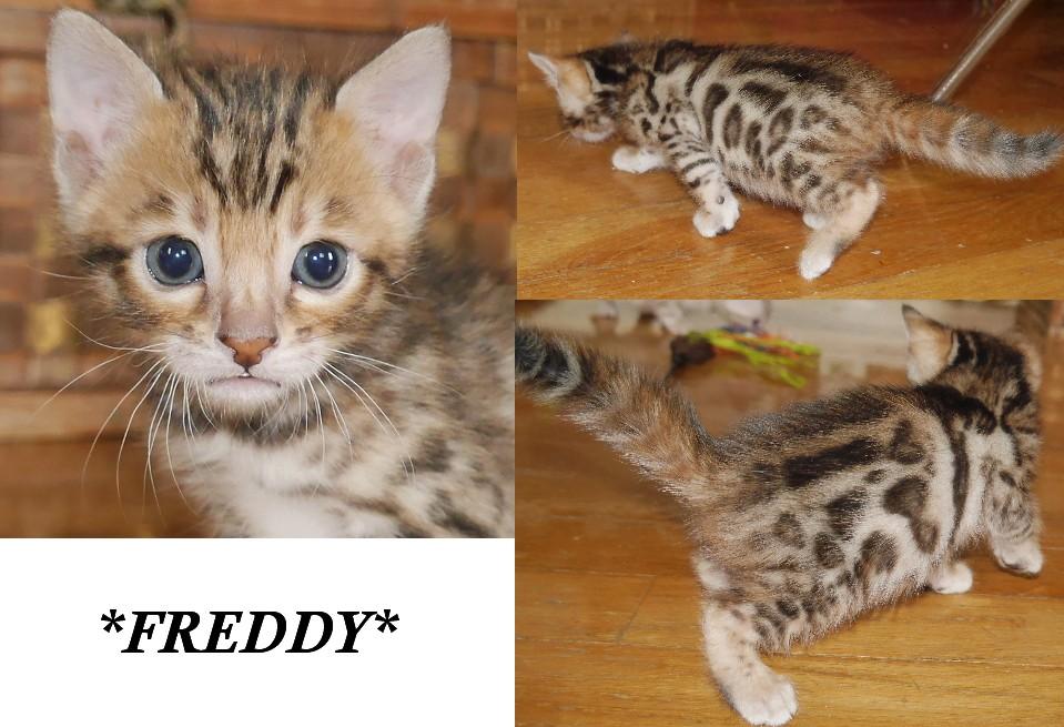 Freddy 4 Weeks