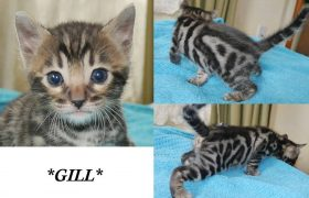 Gill 4 Weeks