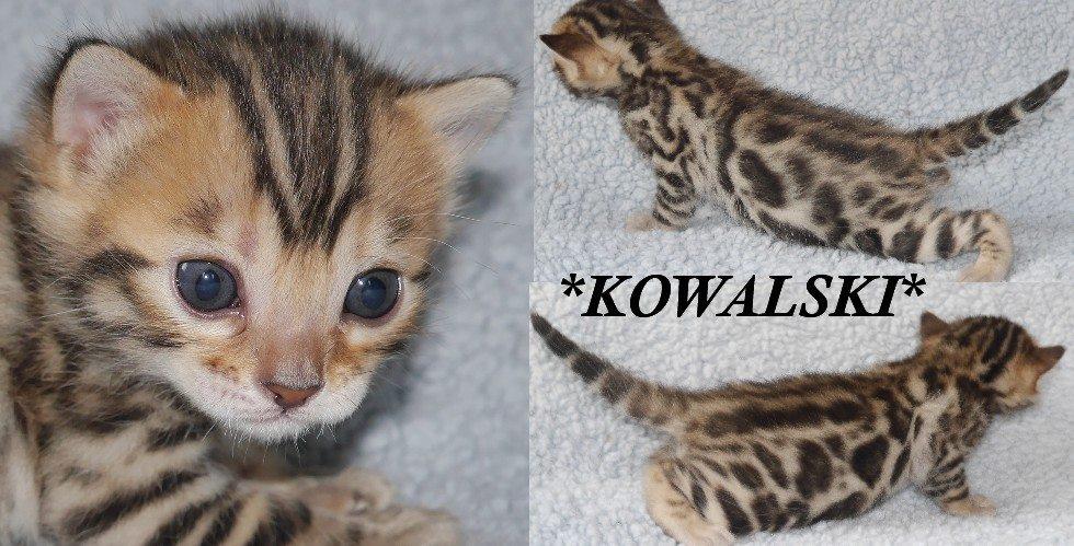 Kowalski 3 Weeks