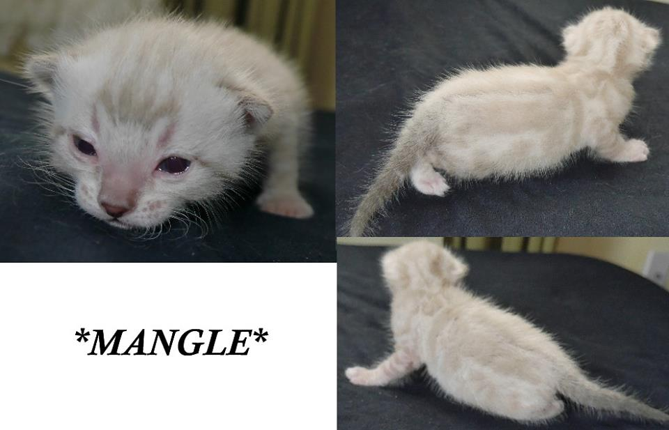 Mangle 2 Weeks