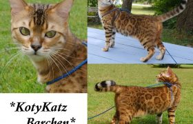 KotyKatz Barchen 2 years