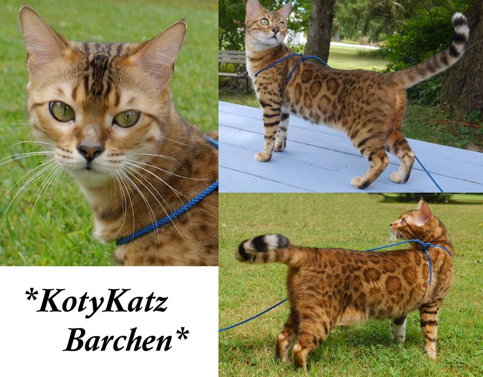 KotyKatz Barchen 2 years
