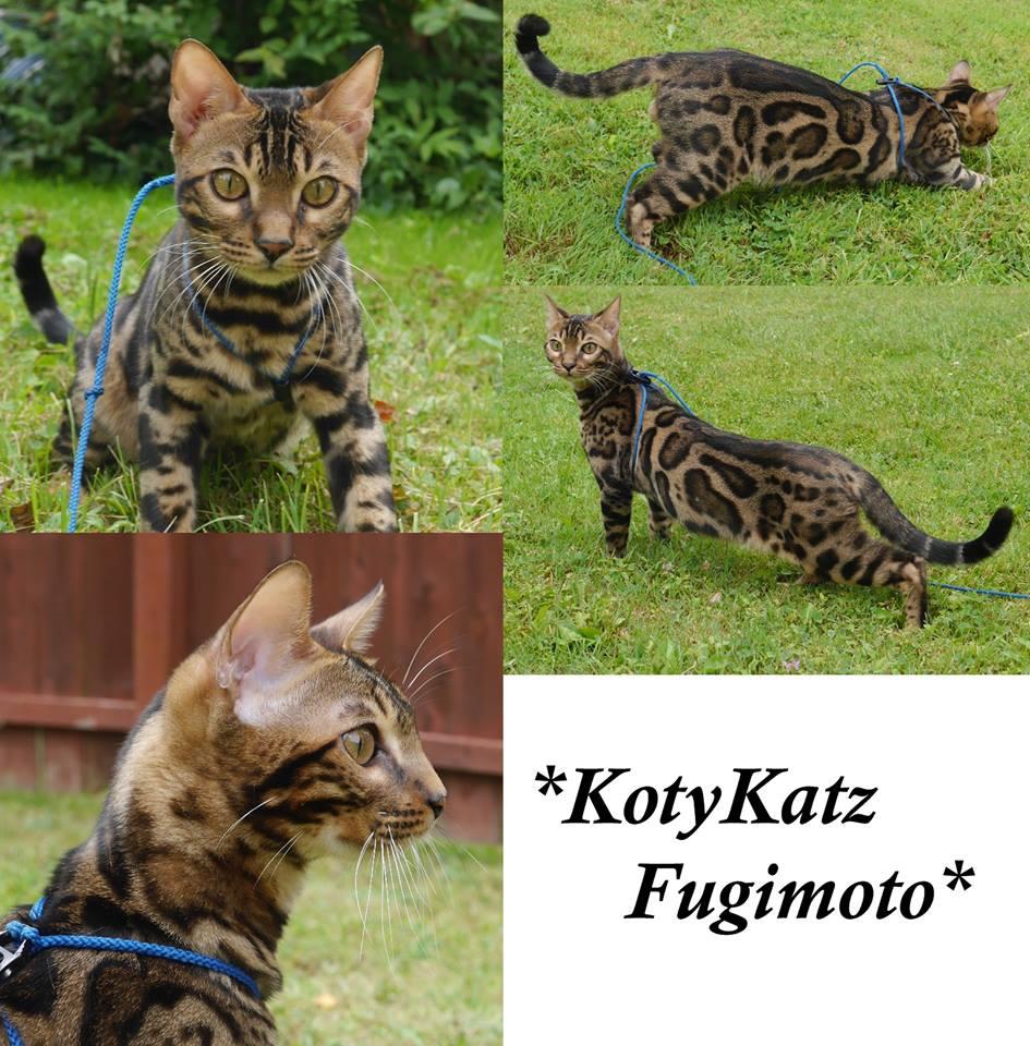 KotyKatz Fugimoto