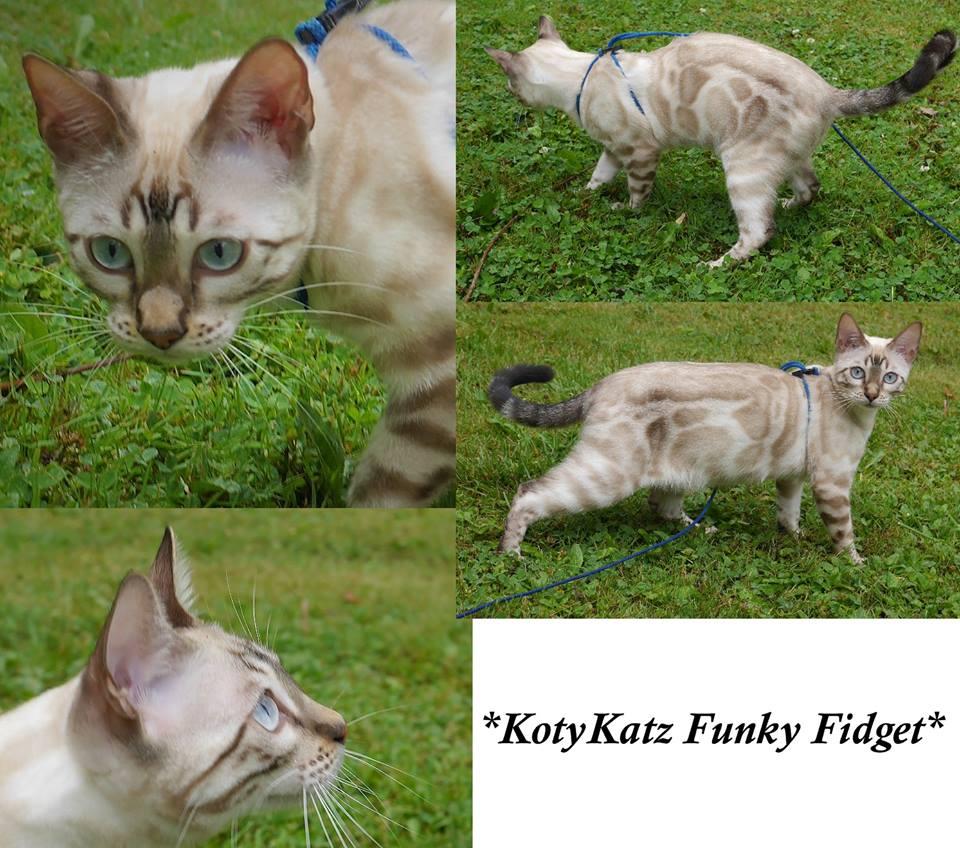KotyKatz Funky Fidget