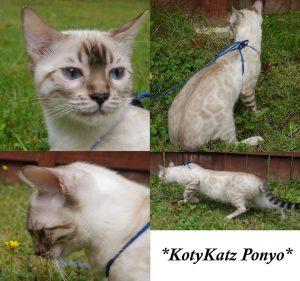 KotyKatz Ponyo 7 mos