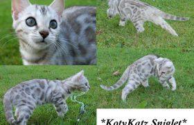 KotyKatz Sniglet 13 Weeks