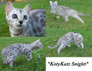 KotyKatz Sniglet