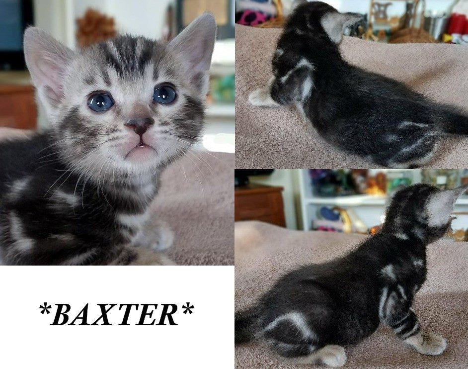 Baxter 4 Weeks