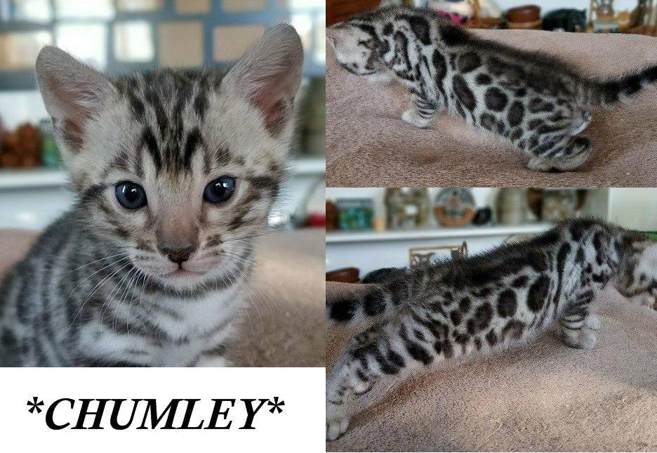 Chumley 4 Weeks