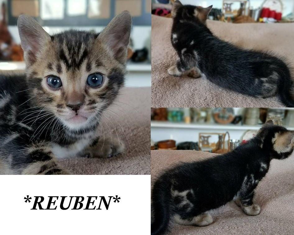 Reuben 4 Weeks