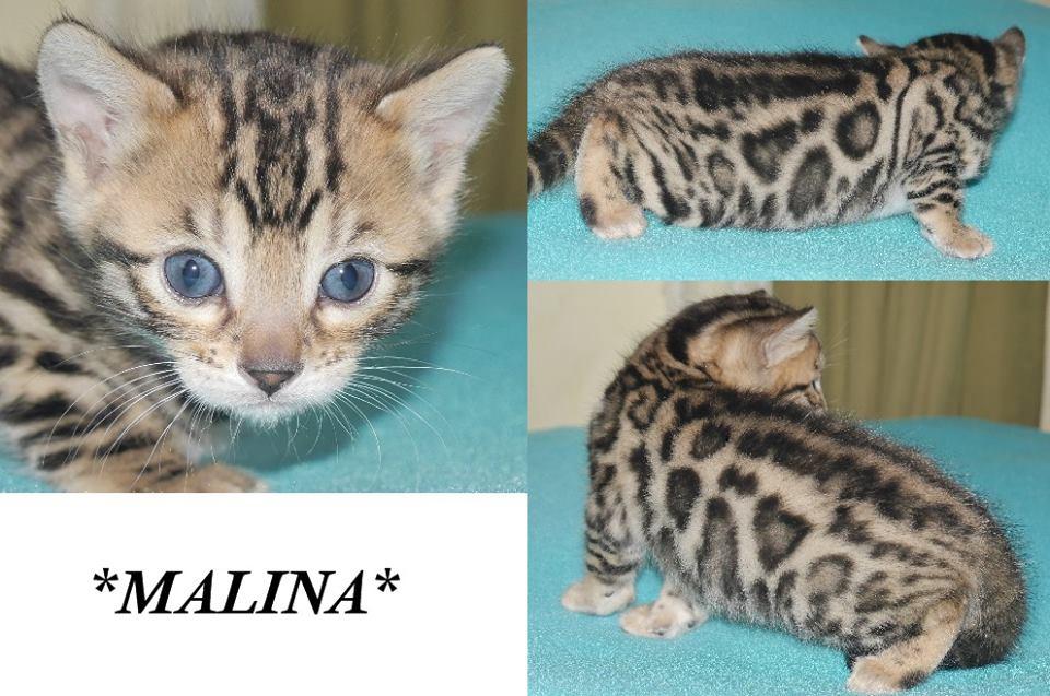 Malina 4 Weeks