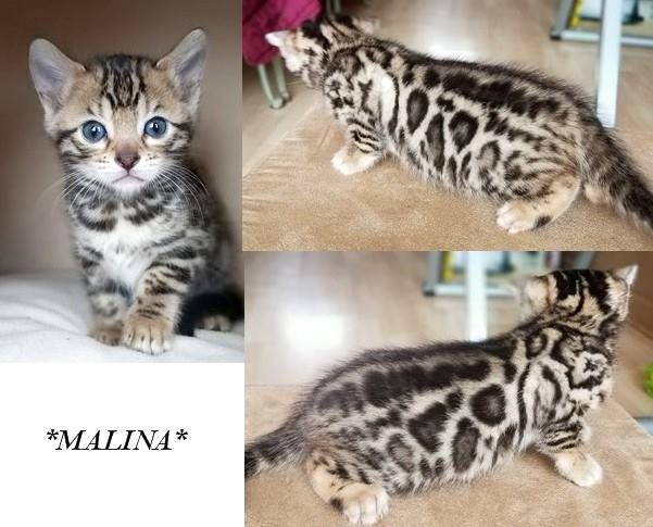 Malina 5 Weeks