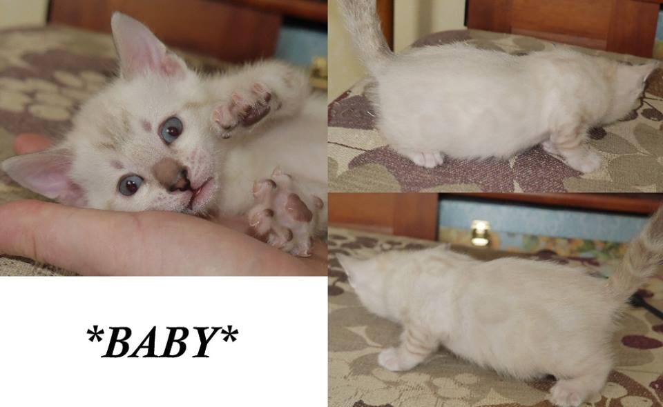 Baby 4 Weeks