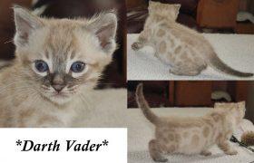 Darth Vader 5 Weeks