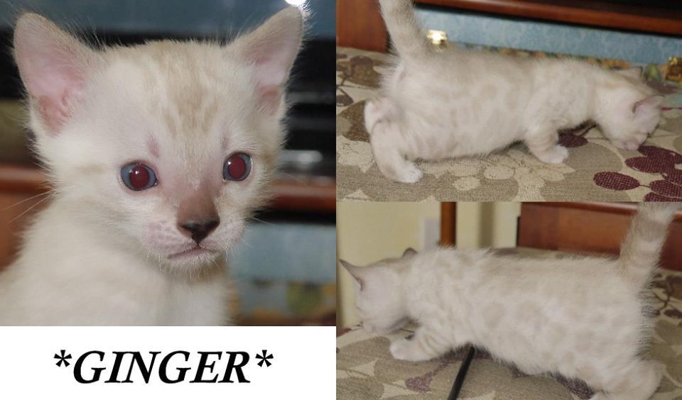 Ginger 4 Weeks