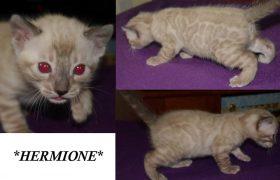 Hermione 3 Weeks