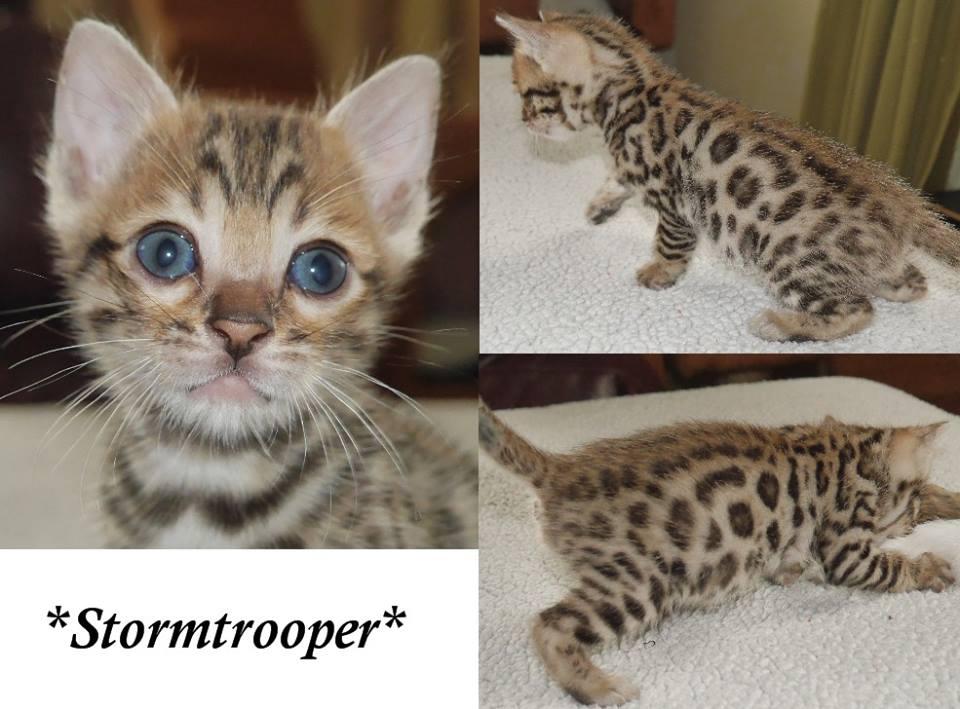 Stormtrooper 5 Weeks