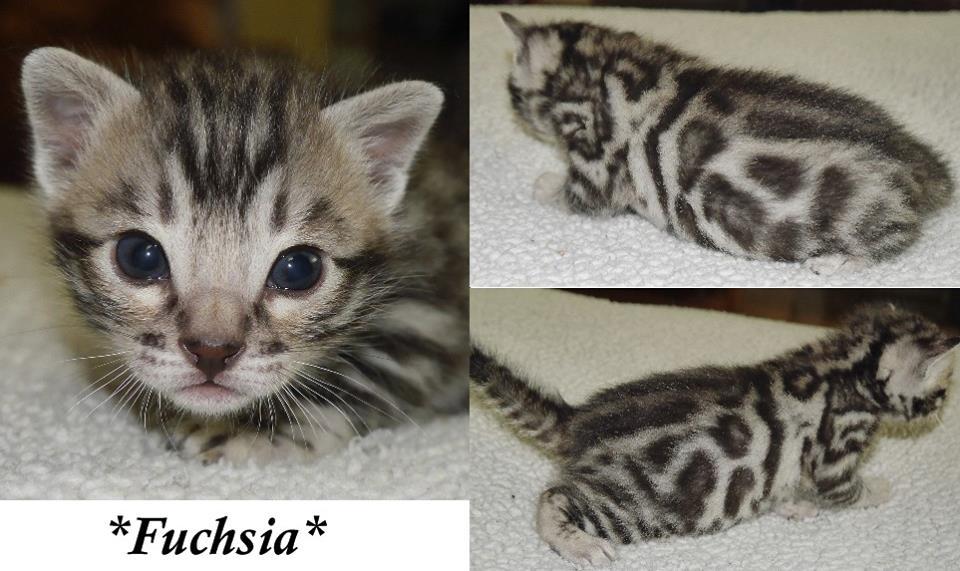 Fuchsia 3 Weeks
