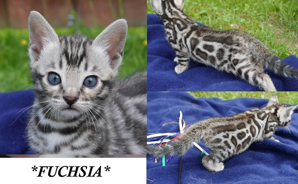 Fuchsia 5 Weeks