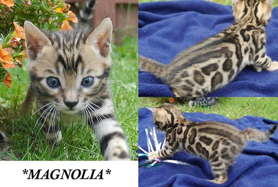 Magnolia 5 Weeks