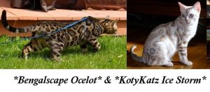 Ocelot and Ice Storm