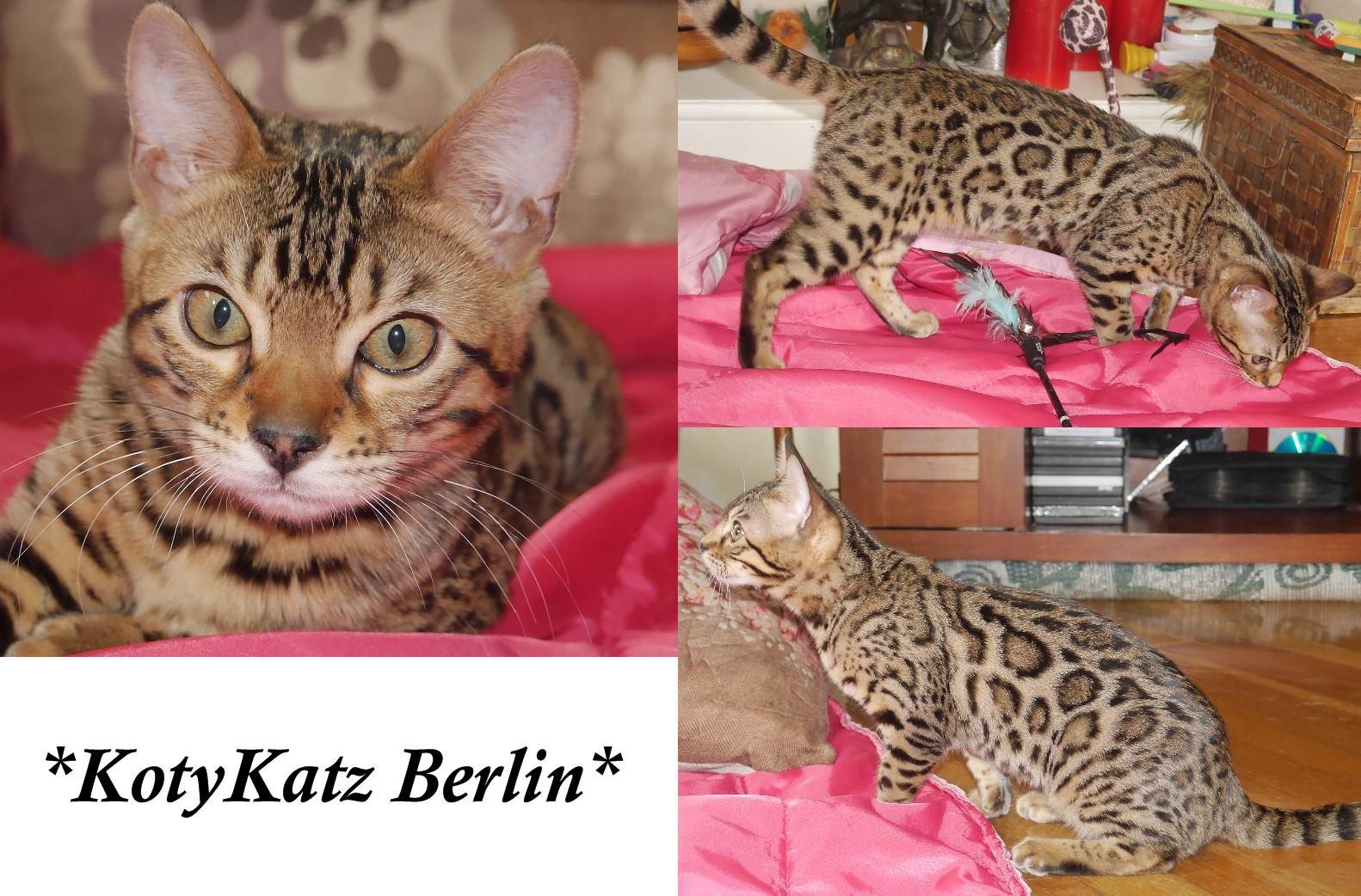 Berlin 4 Months