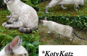 KotyKatz Dacre Sweeps 4 Months