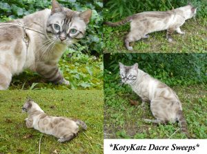 KotyKatz Dacre Sweeps