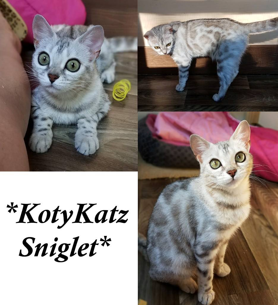 KotyKatz Sniglet 1 Year