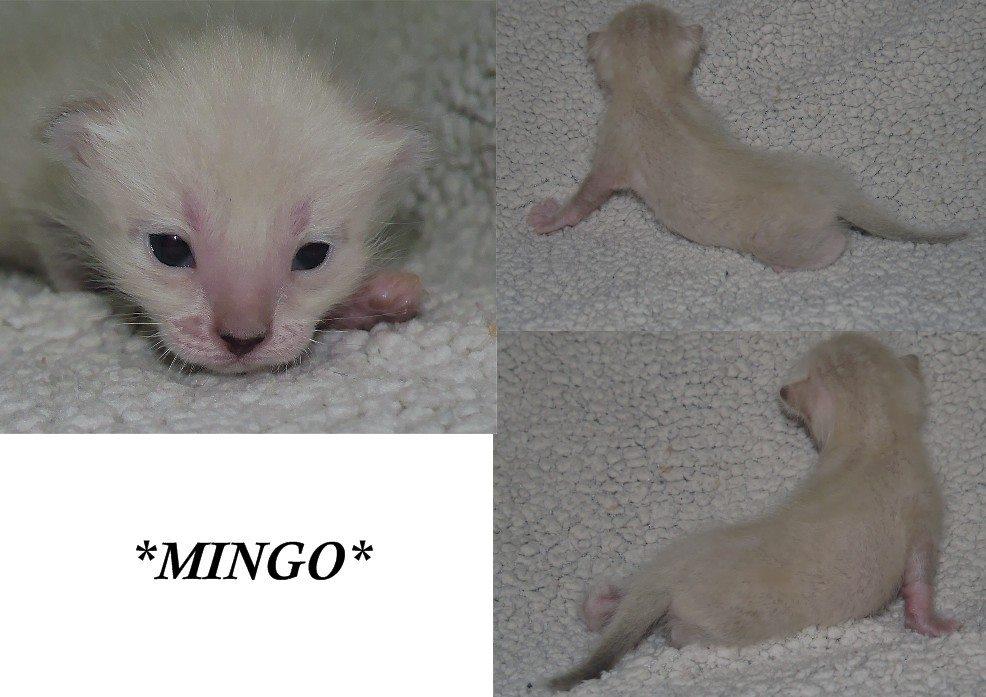 Mingo 2 Weeks