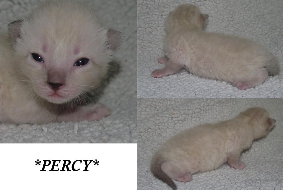 Percy 2 Weeks