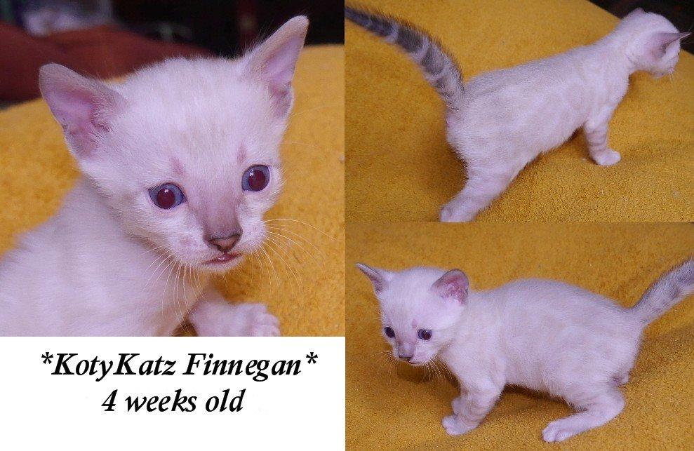 Finnegan 4 Weeks