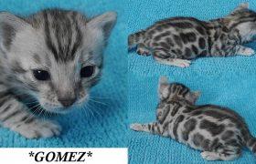Gomez 2.5 Weeks
