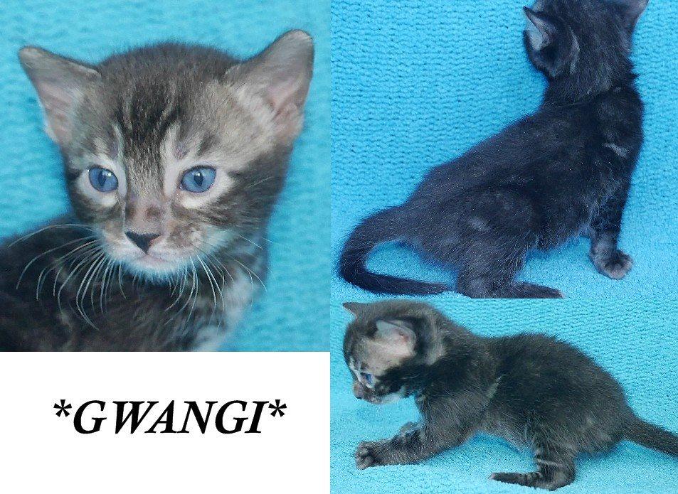 Gwangi 4 Weeks