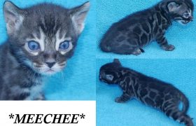MeeChee 4 Weeks