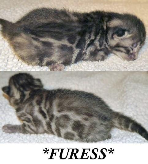 Furess 1 Week