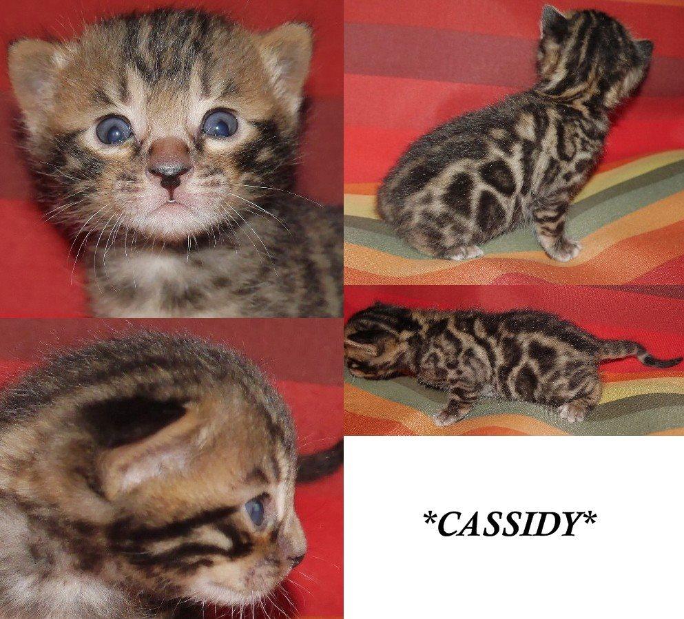 Cassidy 3 Weeks