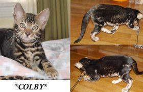 Colby 10 Weeks