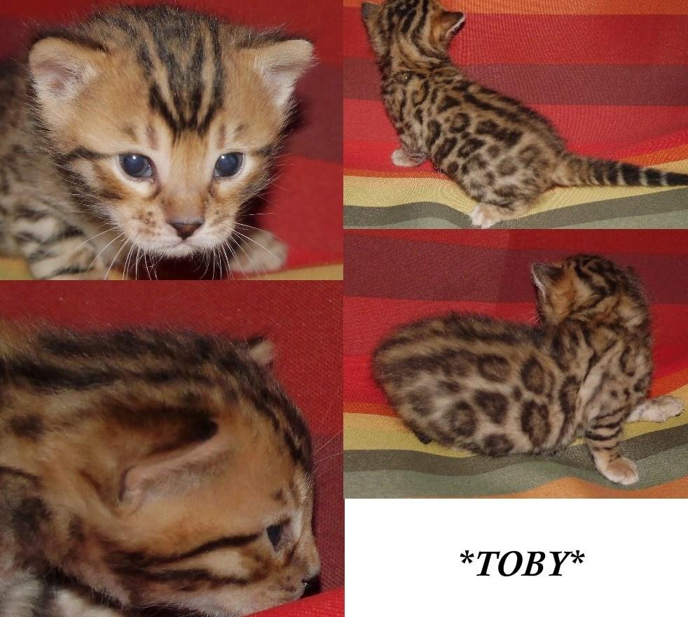 Toby 3 Weeks