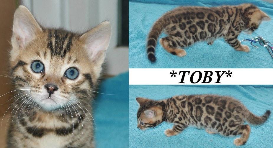 Toby 6 Weeks