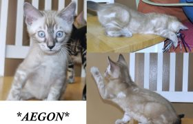 Aegon 8 weeks