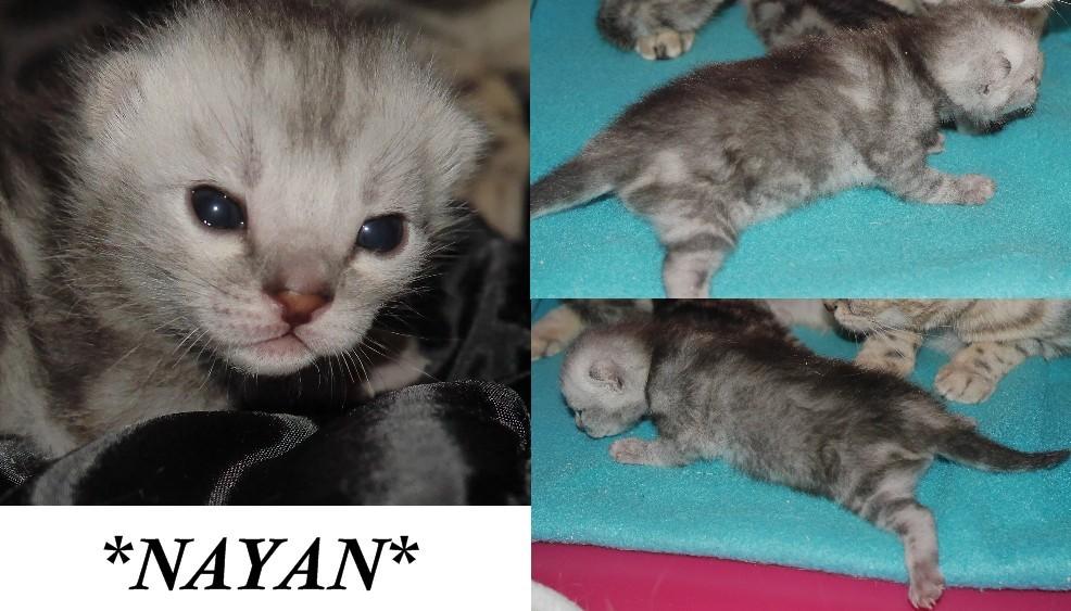 Nayan 2 Weeks