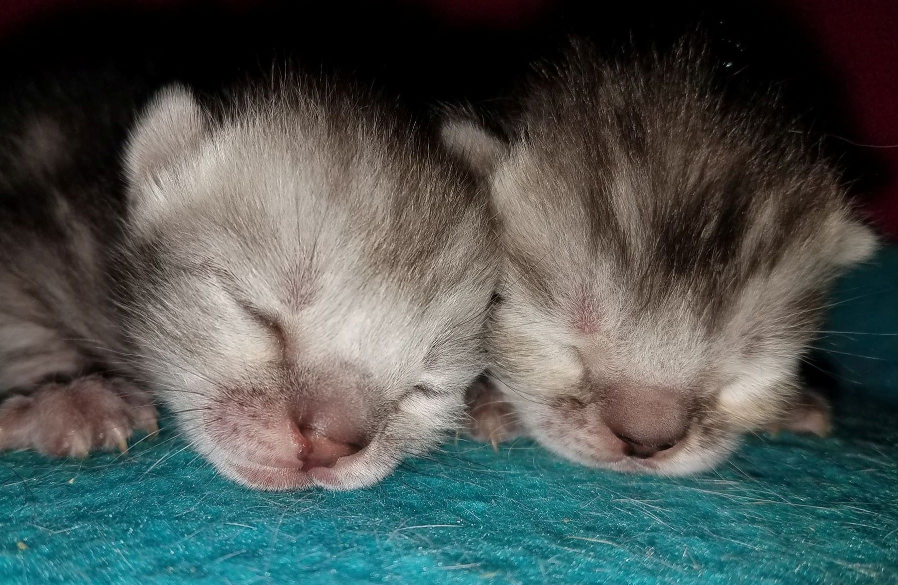 Sniglet Kittens 3