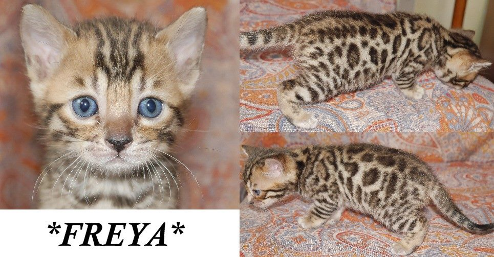 Freya 4 Weeks